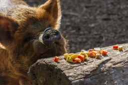 b-Mmmmm Lunch