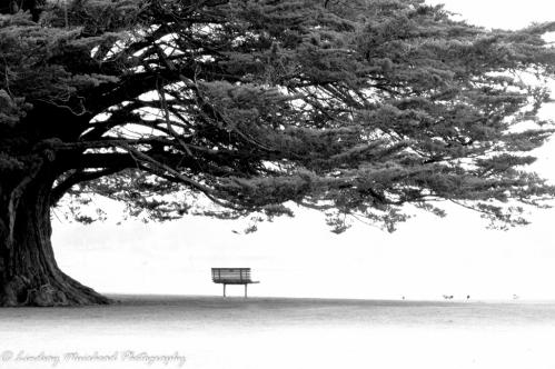 lone-seat