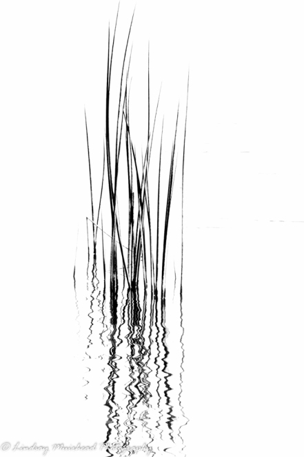 reeds-no2