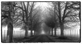 a-freezing-fog