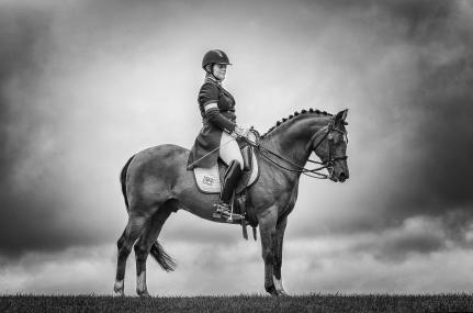 a-pony-stallion