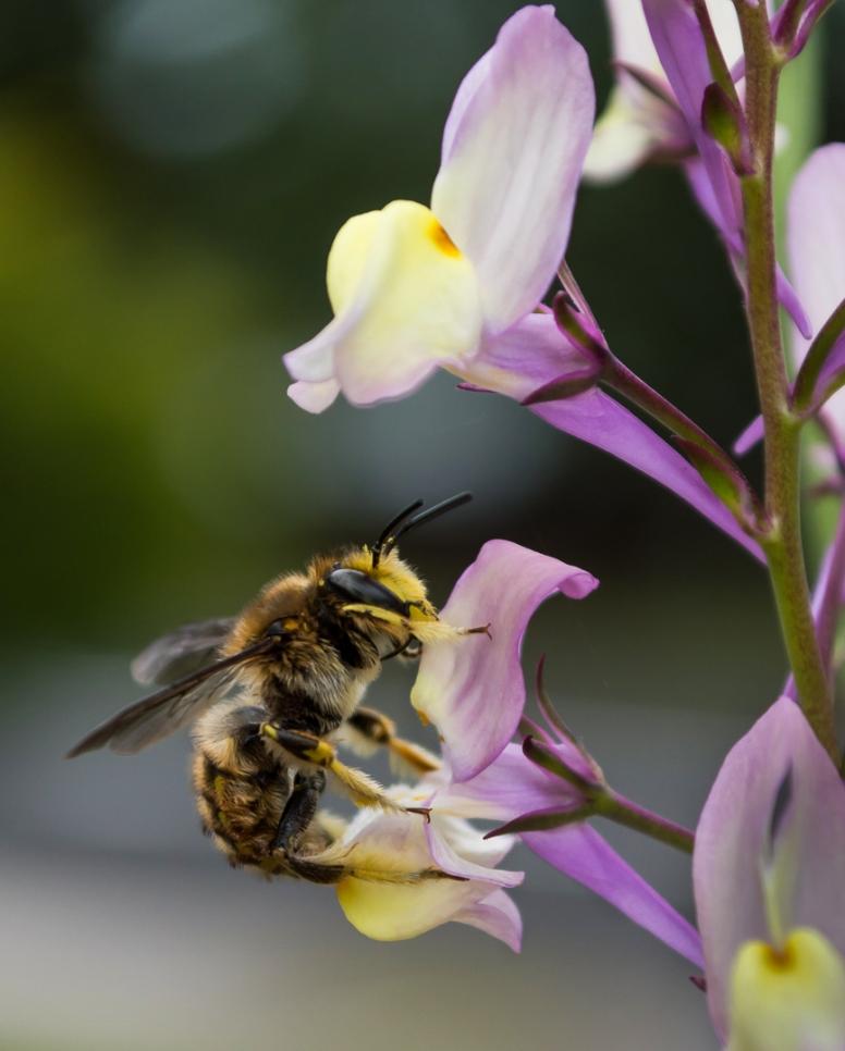 b-nectar-lunch