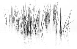 b-reeds