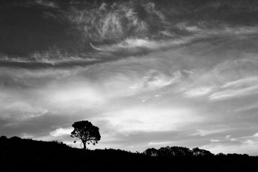 c-alone_at_dusk