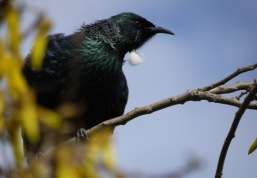 c-tui-at-home