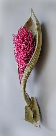 a-palm-pink