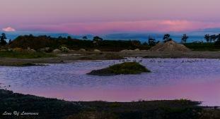 a-pink-pond