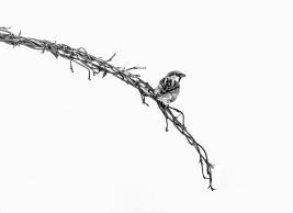 a-sparrow