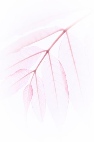 a-veins