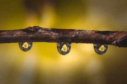A-Reflection_in_a_droplet