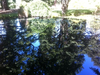 c-water_reflections