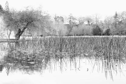 Dorment Lake-A
