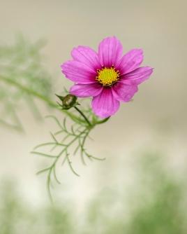 Petaled in Pink by Helena Gratkowski - Category Winner