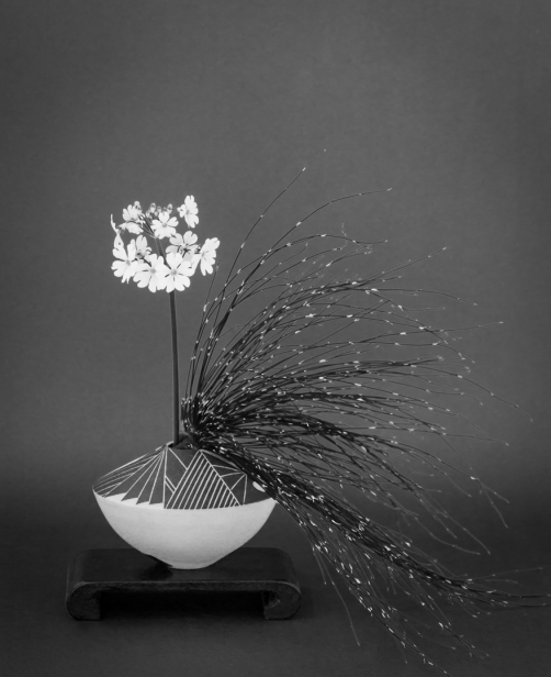 Primula with Bamboo Grass