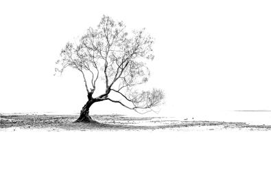 That_Tree