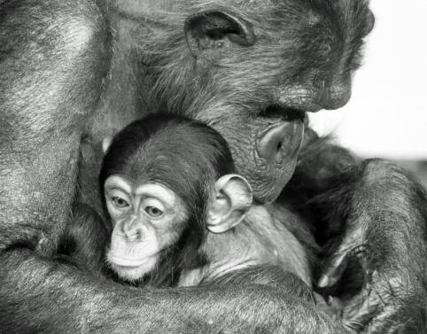 a-Mothers Hug