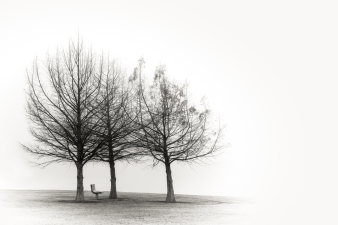 A-Seated in fog