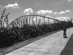 C-Young Taranaki cyclist
