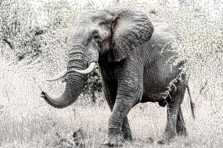 a-Elephant Pencil art