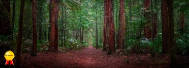 a-Lost_in_the_Redwoods