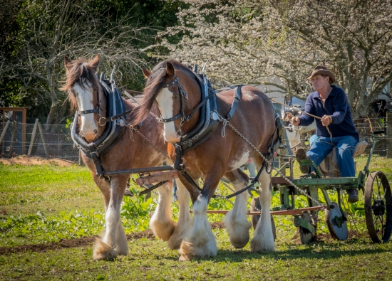 a-Ploughing of Yesteryear