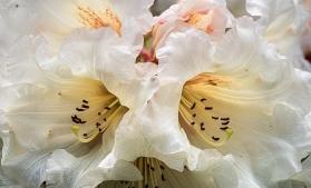 B-Spring