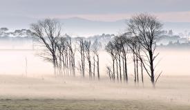 C-Hamilton-mist