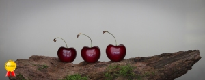 a-Delicate heart shaped gifts from Nature-H