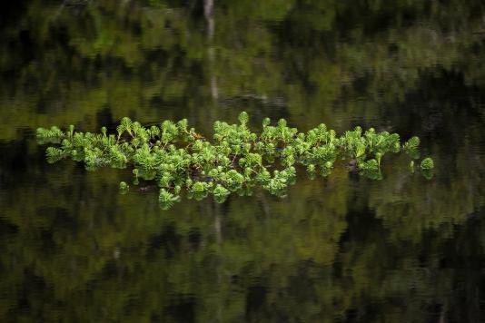 A-Green Island