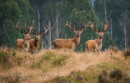 a-Monarchs of the Forest_