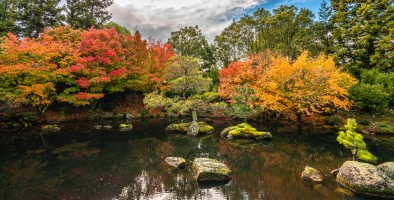 a-Autumn Colours Japanese Garden