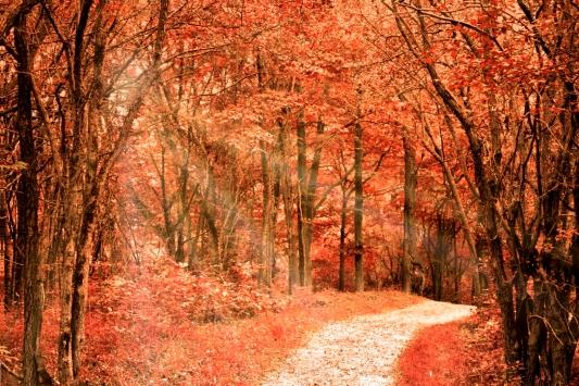 a-autumn in Dundas