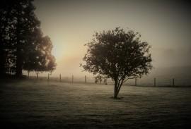 a-Cool Sunrise