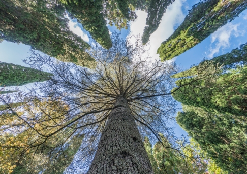 Tree Within Trees