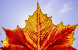 b-centre.stage.celebrate.the.autumn.leaf