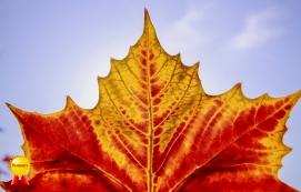 b-centre.stage.celebrate.the.autumn.leaf