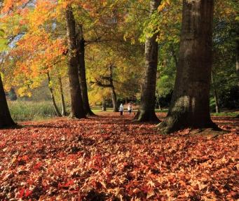 b-Fallen_leaves_and_gentle_sun