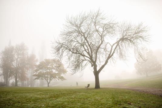 B-Strolling in the fog