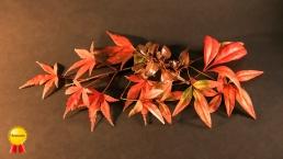 b-the_warm_tones_of_autumn