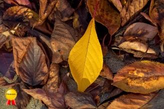 c-Autumn2