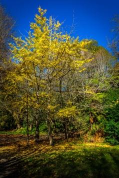 c-Autumn_Yellow