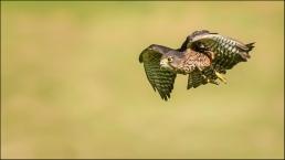 C-In_flight