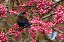 c-its_a_Tui_spring