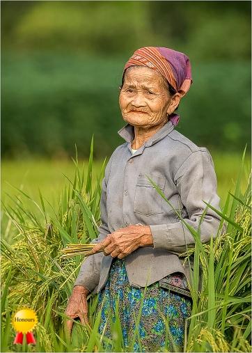 c-Vietnamese_Rice_Farmer