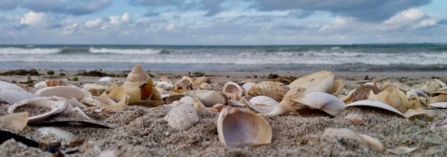 carpet-of-shells-left-by-the-tide-of-nature