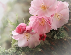 Delicately Introducing Spring