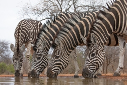 Down_at_the_waterhole