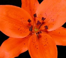 Orange_Beauty