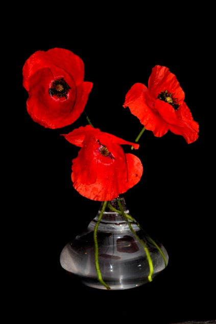 poppies-in-glass-1953