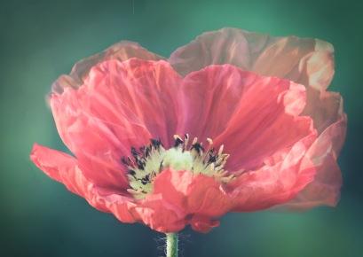Poppy Petticoats